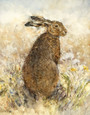 The Curious Hare (Canvas) by Gary Benfield