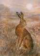 Moonlight Hare by Gary Benfield