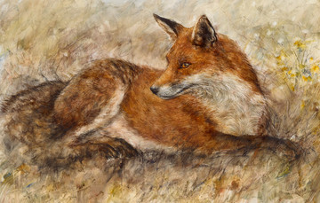 Red Fox Waiting by Gary Benfield